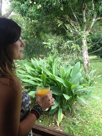 Bella Vista Lodge: fresh mango juice from the tree!