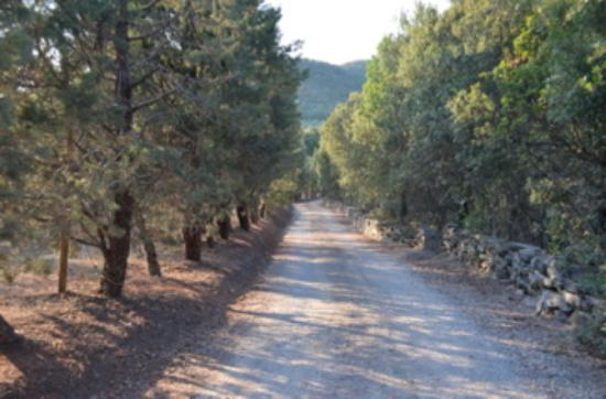 Country House Montali: The road in