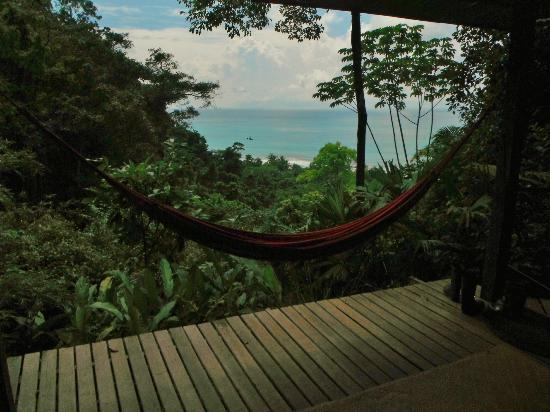 Finca Exotica Ecolodge: A view from Cabina Raiz