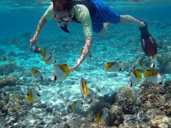 Aroa Marine Reserve: Friendly butterflyfish