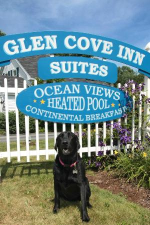 Glen Cove Inn & Suites: Come Visit and Say Hi to Bailey