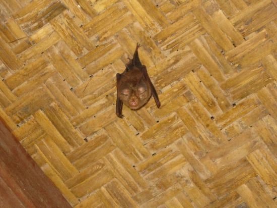 Matahari Inn : Bat in our bathroom