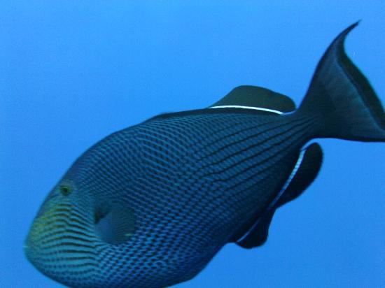 Plong 233 E Sur Tombant Picture Of Seafari Bahamas San
