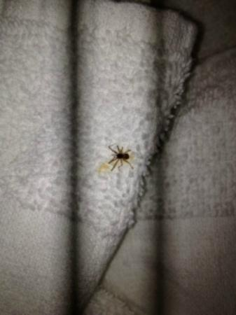 Quality Inn: Spider that was above my bed. Didn't get a photo of the one in my bed!