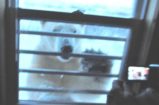 Seal River Heritage Lodge: Woken by a polar bear knocking on our bedroom window