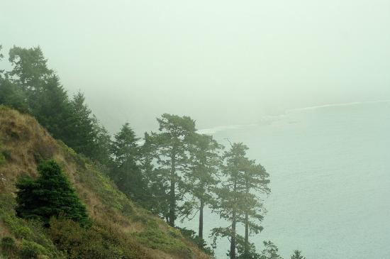 Mendo Insider Tours : Lost Coast -