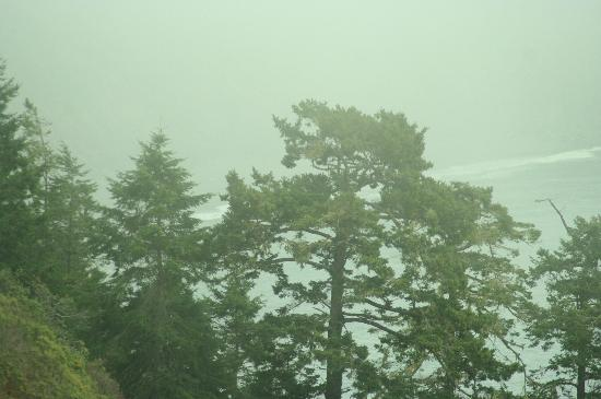 Mendo Insider Tours : Lost Coast - Trees through the fog.