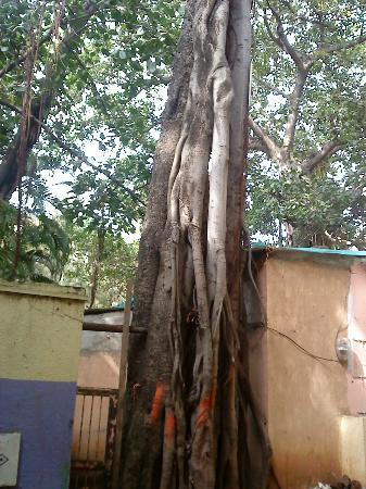 Sita Gumpha : Batabrikshya