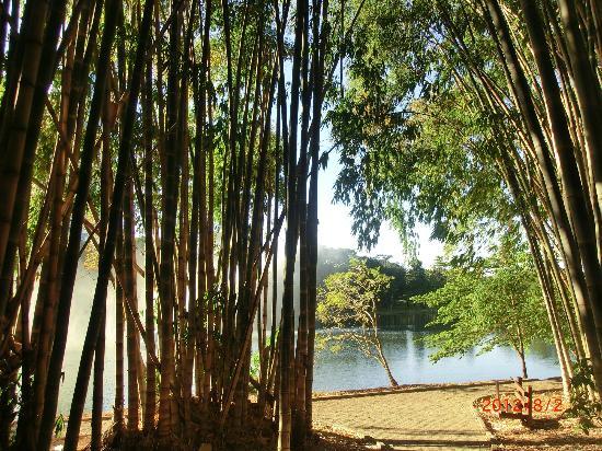 Гояния: Bamboo and lake