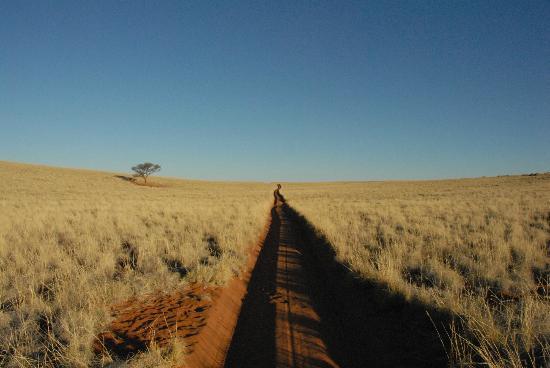 Wolwedans Dune Camp: der weg ist das ziel