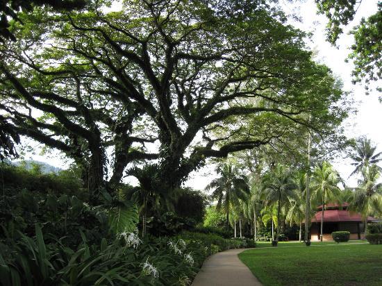 Shangri-La's Rasa Sayang Resort & Spa: Hotelgelände