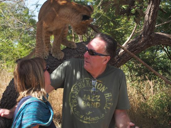 Ngala Lodge: With the lion cubs in Senegal