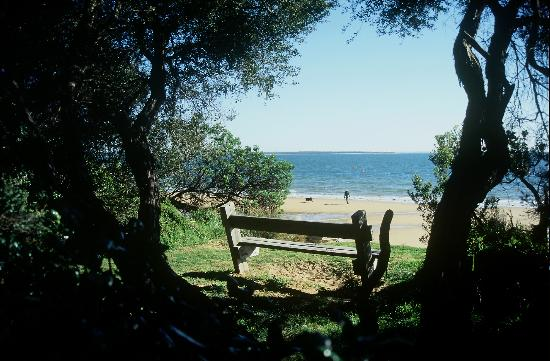 Holmwood Guesthouse: A shaded bench overlooking Cowes Beach.