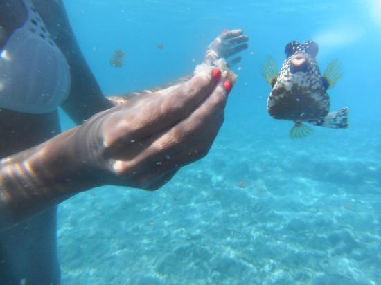 Bahia Apartments & Diving: Trunk fish en lagun