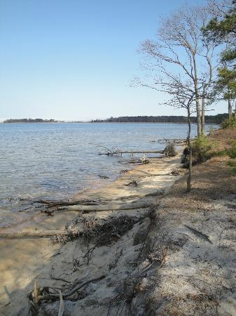 Cattus Island County Park: Bayside, fallen trees and driftwood line the shore for an interesting stroll
