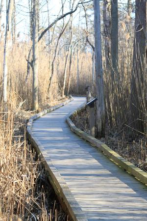 Cattus Island County Park: Some trails through the marshlands have wooden trails, making for an easy walk