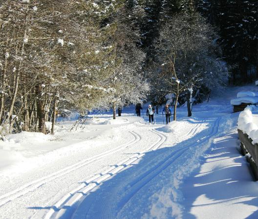 Hohe Burg: Loipe Gschnitztal