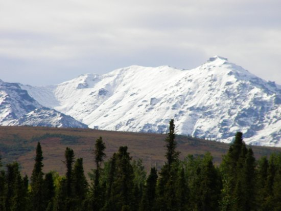 Denali Touch Of Wilderness Bed and Breakfast Inn: Beauty All Around
