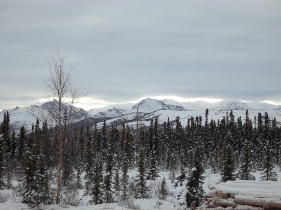 Denali Touch Of Wilderness Bed and Breakfast Inn: We Are Open Year Round