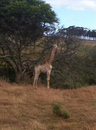 Garden Route Game Lodge: one of the charming animals