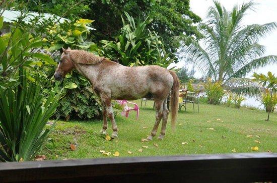 Bonjouir Lodge Paradise Pension: Jardin