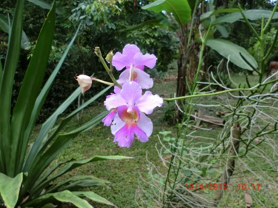 Hotel Escape Caribeno: Orchids