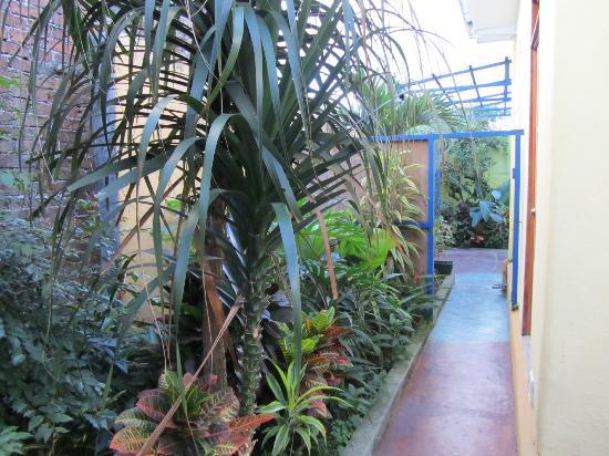 Hotel Casa 69: More gardens
