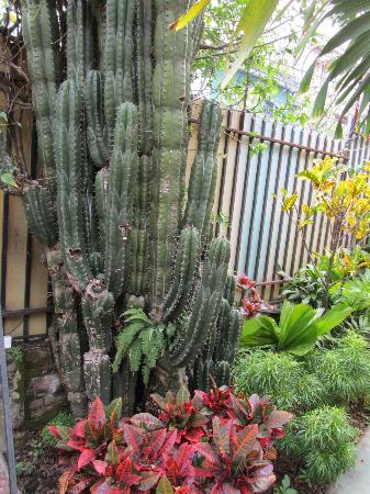 Hotel Casa 69: More and more gardens