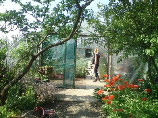 Aldington, UK: Watering the polytunnel