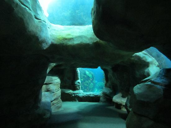 The Penguin Exhibit Is Great You Can Watch Them Diving