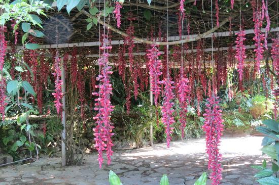 Mayfair Himalayan Spa Resort: lovely plants