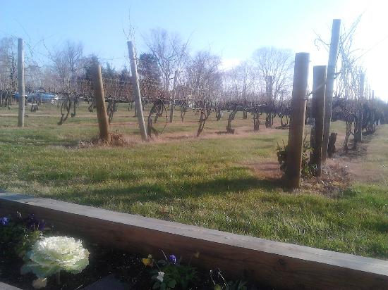 Pearmund Cellars Winery: Scenery
