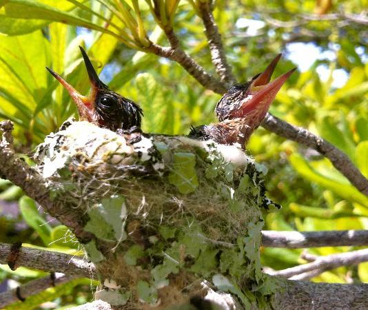 Cenote Yokdzonot : Crias de colibrí muy cerquita del cenote