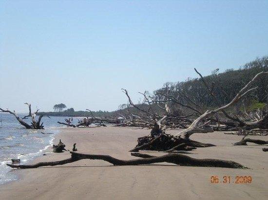 Little Talbot Island State Park: Talbot Island trees