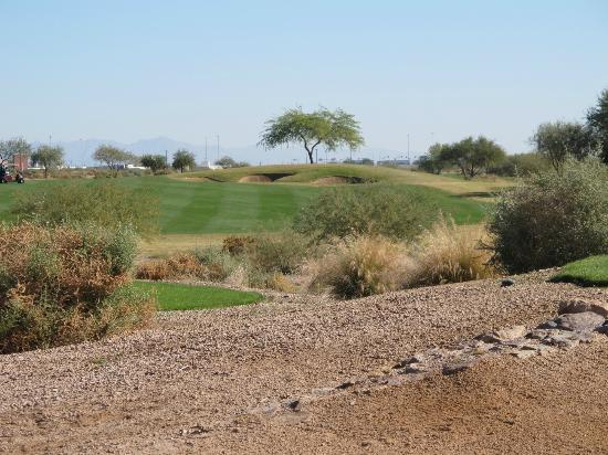 Whirlwind Golf Club: Cattail
