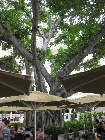 Moana Surfrider, A Westin Resort & Spa: The Banyan Tree Beautiful, natural, tropical shade at the Beachbar