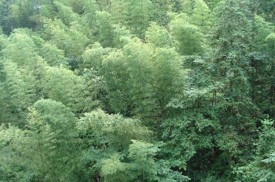 Xiyang County, China: Bamboo forrest