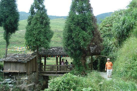 Xiyang County, China: Scenery on path through rice terraces