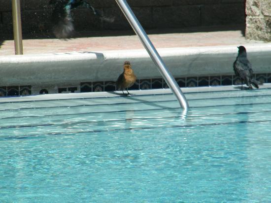 邁阿密海灘海鷗酒店照片