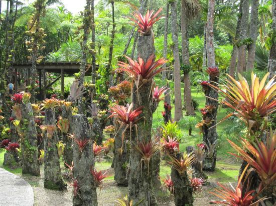 Jardin de Balata: la nature