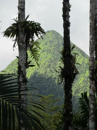 Jardín Balata: la montagne pelée