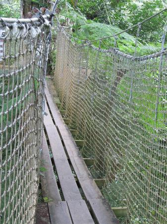 Jardin de Balata: le pont suspendu