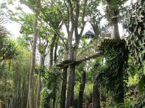 Jardin de Balata: les arbres