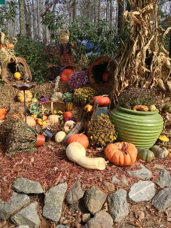 Asheville Cabins of Willow Winds: Fall display