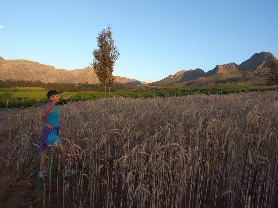 Dieu Donne Stellenbosch : View of Helderberg