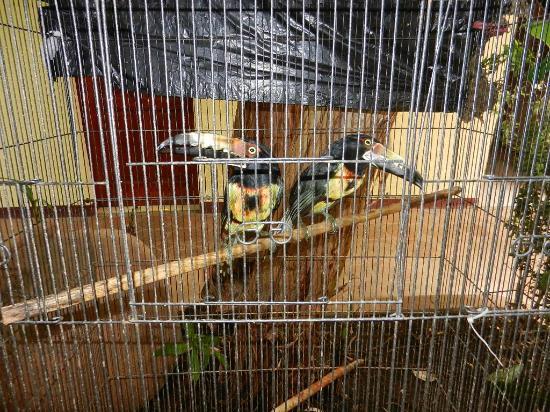 Art Hotel Managua: Tucan Birds