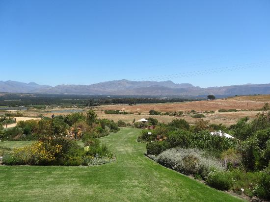 Cape Team Tours - Day Tours: Wine Tour