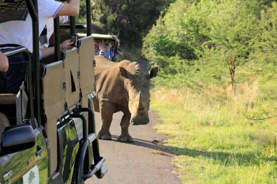 Safari pilanesberg picture of ivory tree game lodge pilanesberg