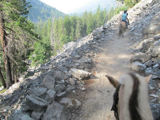 Stehekin Valley Ranch: Fjord horses took us up the mountain
