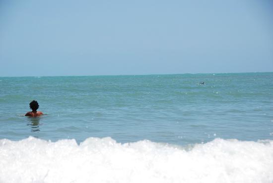 Dolphins Bay: Delfino a dritta !